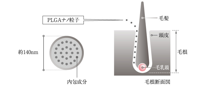 DHTを抑制する成分配合の育毛シャンプー